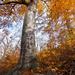 Széllábu ősz