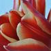 Album - Növények