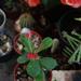 Album - Kaktusz