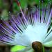 virágok, flóra, természet