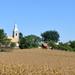 Templom kukoricával
