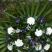 055.  / 20 szálas - Élővirág állókoszorú