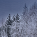 téli kitekintés