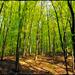 Zöld erdőben