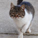 újabb macska