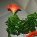 növények 039