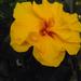 növények 005