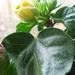növények 014