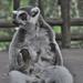 lemur3
