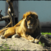 Kecskemét vadaspark 075