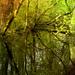 Lápi erdő