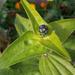 különleges növények, egy izgalmas bimbó