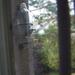 madarak, etető az ablakban