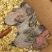 Nőcsörgő szárnyacskák