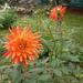 Virágok_dísznövények